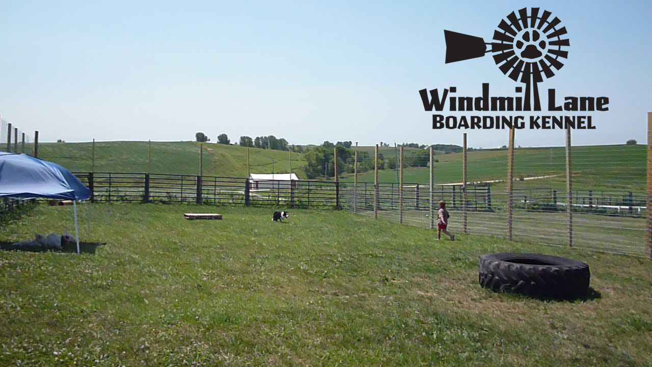 Windmill_Lane_Boarding_Kennel-large-play-area-4