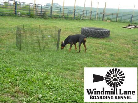 Windmill_Lane_Boarding_Kennel-large-play-area-1-copy