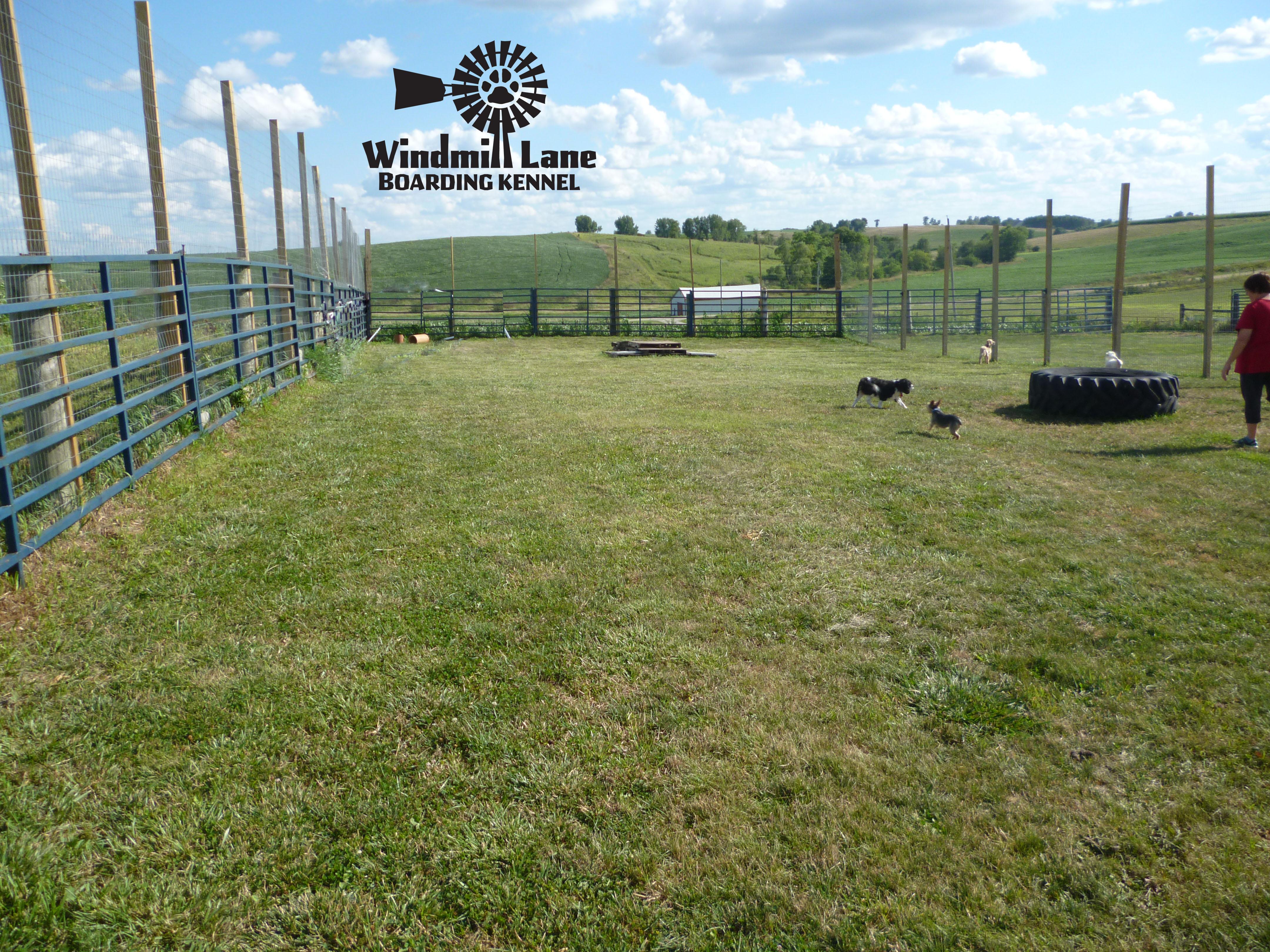 Windmill_Lane_Boarding_Kennel-large-play-area-2-copy